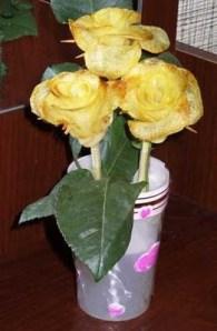 potato_roses_12